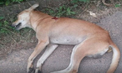 dogs-found-poisoned